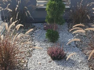 Rośliny przed tarasem 2