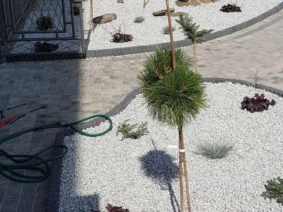 Rośliny przed tarasem 3