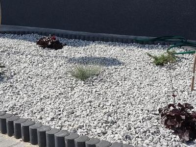 Rośliny przed tarasem 4