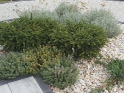 Rośliny przed tarasem 5